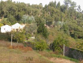 Image No.5-Ferme de 2 chambres à vendre à Monchique