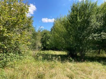 5685_berthou_immo_lanouaille_maison_de_campagne_2_hectares-31-
