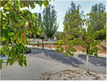 Atlas-Tempo-Humilladero-Spain-1-tree--8-