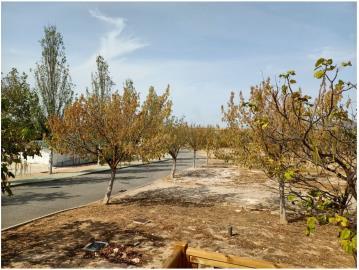 Atlas-Tempo-Humilladero-Spain-1-tree--9-
