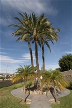 Image No.11-Villa de 7 chambres à vendre à Benissa