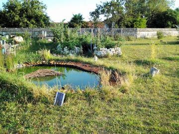 garden-pond-and-veg