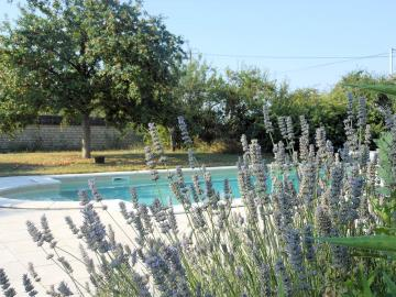 pool-lavendar