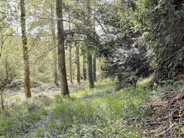 3---Woodland