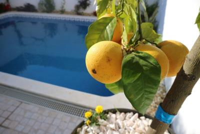 home-grown-lemons