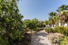 Image No.34-Maison / Villa de 4 chambres à vendre à Azinhal