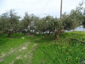 Image No.4-Terre à vendre à Kalyves