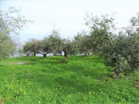 Image No.2-Terre à vendre à Kalyves