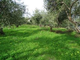 Image No.6-Terre à vendre à Kalyves