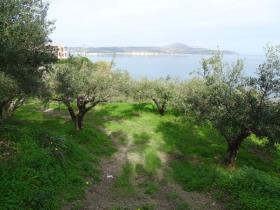 Image No.10-Terre à vendre à Kalyves
