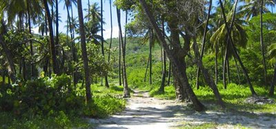 Firefly Hotel and Beach Estate Bequia 25.4 Acres Image 4