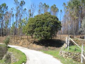 Image No.18-Country Property for sale