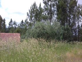 Image No.7-Maison de campagne à vendre à Sertã