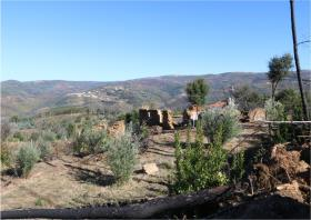 Image No.7-Terre à vendre à Oleiros