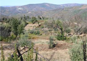 Image No.10-Terre à vendre à Oleiros