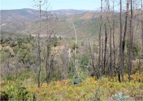 Image No.13-Terre à vendre à Oleiros