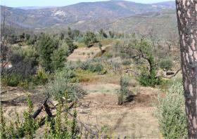 Image No.17-Terre à vendre à Oleiros