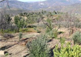 Image No.18-Terre à vendre à Oleiros
