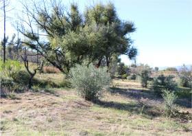 Image No.19-Terre à vendre à Oleiros