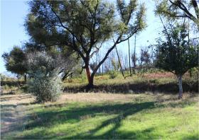Image No.21-Terre à vendre à Oleiros
