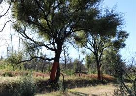 Image No.22-Terre à vendre à Oleiros