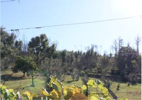 Image No.24-Terre à vendre à Oleiros