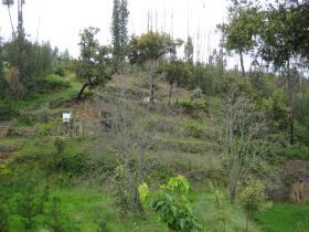 Image No.5-Propriété de pays à vendre à Troviscal
