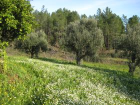 Image No.14-Country Property for sale