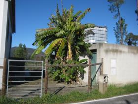 Image No.5-Propriété de pays de 2 chambres à vendre à Cernache do Bonjardim