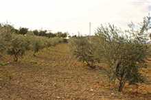 Image No.5-Propriété de 5 chambres à vendre à Alhaurín el Grande