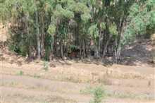 Image No.11-Propriété de 4 chambres à vendre à Alhaurín el Grande