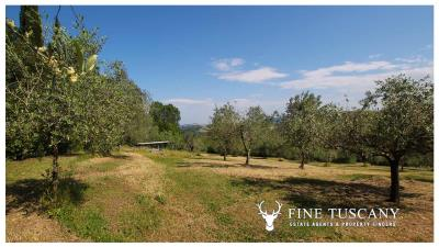 Fully-detached-stone-house-for-sale-in-Volterra-Pisa-Tuscany-Italy-35