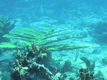 cades-reef