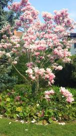 10-fioriture