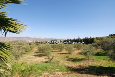 maroc-orchards-copy