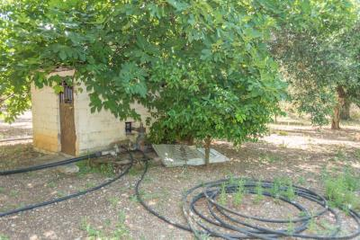 Lovely-250-sq-m--4-bed-2-bath-house--set-on-2000-sq-m--plot--2-km-from-Kyparissia--Excellent-selling-price-----901---15-