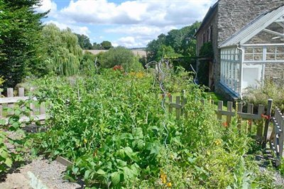 vegetable-patch-2