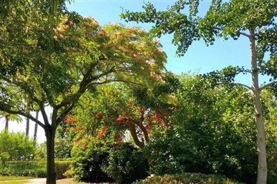 park-exflora