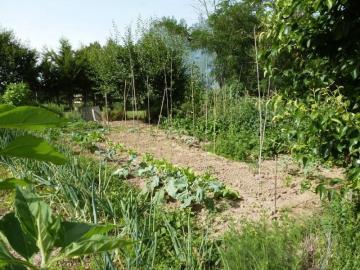 Taylor-veg-garden