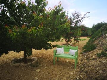 7-Garden---mature-trees