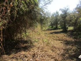 Image No.1-Terre à vendre à Sardoal