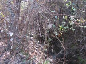 Image No.7-Terre à vendre à Sardoal