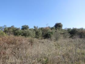 Image No.3-Terrain à vendre à Sardoal