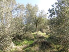 Image No.6-Terrain à vendre à Sardoal