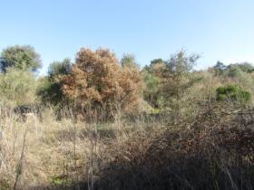 Image No.9-Terrain à vendre à Sardoal