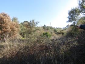 Image No.10-Terrain à vendre à Sardoal