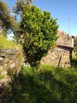 Image No.25-Propriété de pays à vendre à Cernache do Bonjardim