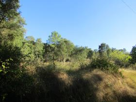 Image No.0-Terrain à vendre à Sardoal