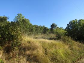 Image No.1-Terrain à vendre à Sardoal