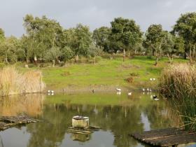 Image No.2-Propriété de pays de 2 chambres à vendre à Sardoal